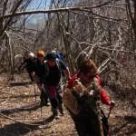 3_Na stezi med poskodovanim drevjem