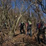 4_Pot skozi od zleda unicen gozdicek