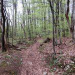 05. skozi gozd