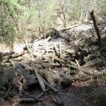 69. Hudourniško naplavljen les